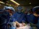 US SurgeoFirst Pig-to- Human Kidney Transplant